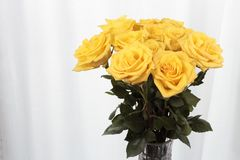 Dozen Yellow with Small Pink Streaks Roses Bouquet. Vase of yellow rose flowers in front of a curtain. Twelve yellow roses with pink streaks vase bouquet. One stock photography