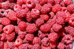 Dozens of bright red, fresh raspberries Royalty Free Stock Image