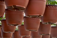 Dozens of brown plastic flowerpot with flowers that have yet to flourish in rows in a sunny greenhouse. In a village near Novi Sad, Serbia royalty free stock image