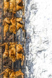 Dozens of chiken ate on th BBQ grill : Wilson Park, Torrance. Stock Photography
