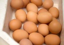 Dozens of eggs in a carton Stock Photography