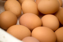 Dozens of eggs in a carton. Novi Sad, Serbia Stock Images
