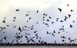 Dozens flying doves. Varna city railway station roof and dozens flying doves,Bulgaria Stock Photography