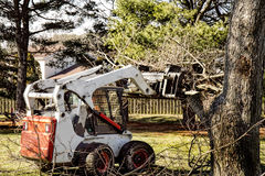 Dozer removing limbs and branches. Professional landscapers remove branches and limbs off tree in preparation of final cut of tree Stock Images