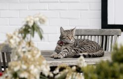 Dozing cat. A small stripped cat dozing in the sun royalty free stock image