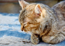 Dozing cat Stock Photos