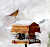 dozownik ptasia zima Fotografia Royalty Free