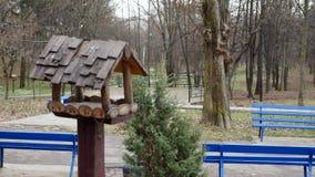 Dozowniki dla ptaków w miasto parku zdjęcie wideo