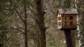 Dozowniki dla ptaków w miasto parku zbiory wideo