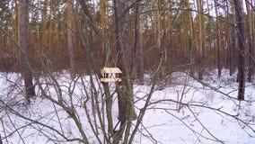 Dozowniki dla ptaków w miasto parku titmouse latał dozownik w zimie Ptasi dozownika obwieszenie na drzewie zawdzięczający sobie zdjęcie wideo