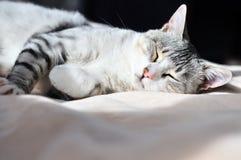 Free Dozy Cat Stock Images - 16866714