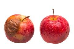 Dozy rött äpple som jämförelse till det nya röda äpplet Arkivbild