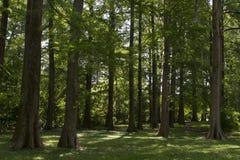 Dozzine di alberi in un prato immagini stock