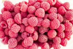 Dozzine di frutti freschi del lampone Immagini Stock Libere da Diritti