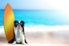 Dog on the beach with surfboard. The dog is sitting on the beach in a tie and blue sunglasses. Behind it is a surfboard. In the background is the clear sea. It`s stock photography