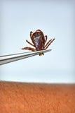 Dépose de coutil de crabot Image libre de droits