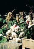 DrÃ'me的俏丽的拨蒜在比伊莱巴罗涅,DrÃ'me Provençale,法国市场上的  免版税图库摄影