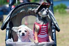 dräkthundar sitter stroller mycket lilla två royaltyfri fotografi