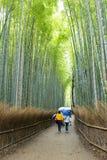 Drängen Sie sich im Bambuswald in Adashino-nenbutsuji Tempel, Arashiyama Stockbilder