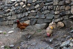Drób, kurczaki w villiage zdjęcia royalty free