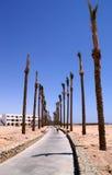 Dróg przemian pustynni drzewa Obraz Royalty Free