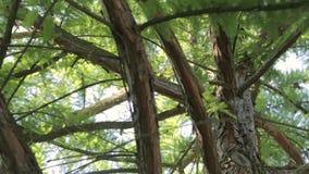 Dröhnen Sie oben leicht, durchlaufend die Niederlassungen eines Baums stock video footage