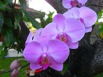 Dröhnende Orchideenblumen auf Baum Stockfotos
