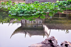 Dröja sig kvar det trädgårds- lotusblommadammet Arkivbild