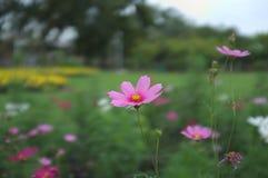 Dröm- blommaskott i molnet arkivfoto