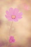Dröm i rosa färger Arkivbilder