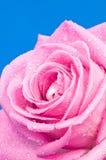 dröm- pink Arkivfoto
