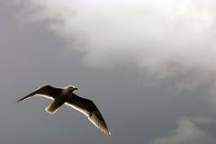 dröm- seagull Arkivfoto