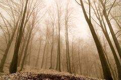 dröm- skog Fotografering för Bildbyråer