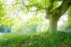 dröm- skog Arkivbilder