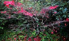 dröm- tree Royaltyfria Foton