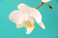 dröm- white Royaltyfri Fotografi