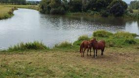 Drömd hästar och sjö Royaltyfri Fotografi