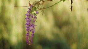 Drömlik blomma på trädet stock video