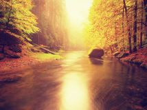 Drömlik höstbergflod som täckas av orange bokträdsidor Nya gröna sidor på filialer över - vatten gör färgrik refle royaltyfria foton