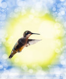 drömlik hummingbirdbild Arkivbilder