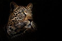 Drömlik leopard Arkivbild