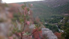 Drömlik linskok strykeffekt i natur framme av blad stock video