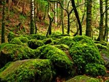 drömlik skog royaltyfria foton