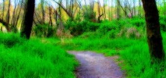 drömlik skog Arkivbilder