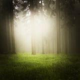 drömlik skog royaltyfri foto