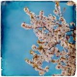 Drömlik springflowersbakgrund royaltyfri fotografi