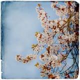 Drömlik springflowersbakgrund arkivfoto
