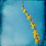 Drömlik springflowersbakgrund arkivbilder