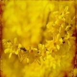 Drömlik springflowersbakgrund royaltyfri bild