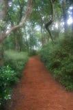 drömlik trädgårds- bana arkivfoton